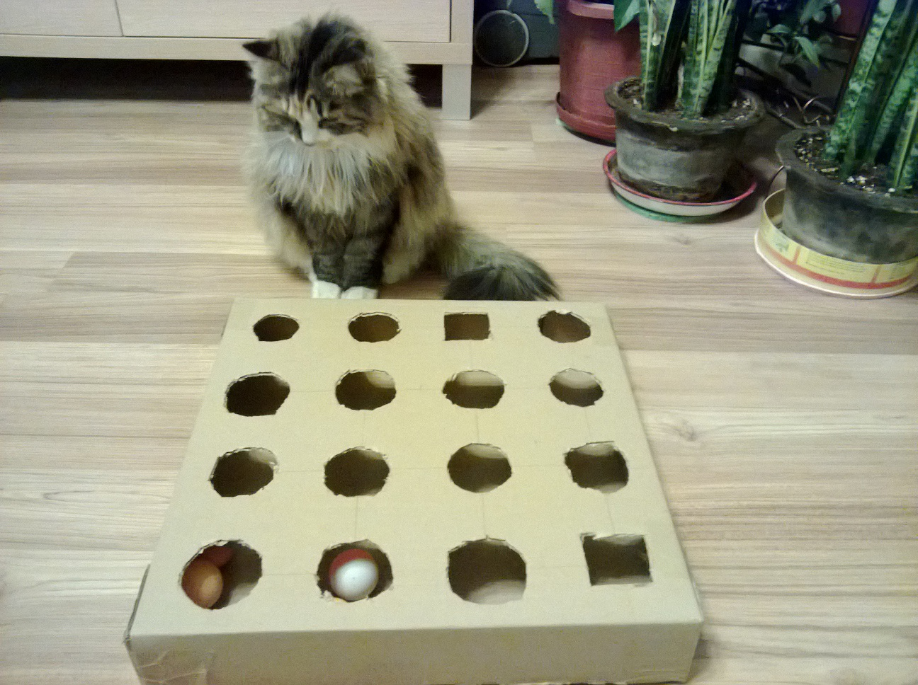 diy-peek-and-play-toy-box-for-cat-best-cat-toy-ever