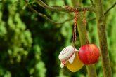 apple-tree-apple-apple-compote-jar-162760