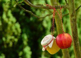 apple-tree-apple-apple-compote-jar-162760-260x188.jpg