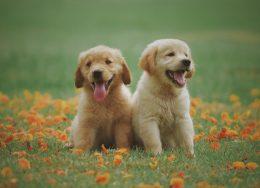 adorable-animal-breed-1108099-260x188.jpg