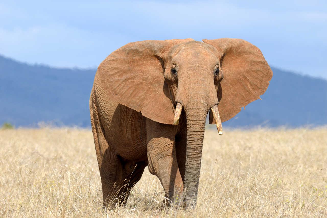 Açık havada büyük bir fil