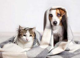 hayvan-sahipleri-için-temizlik-rehberi-260x188.jpg