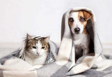 hayvan-sahipleri-için-temizlik-rehberi-360x250.jpg