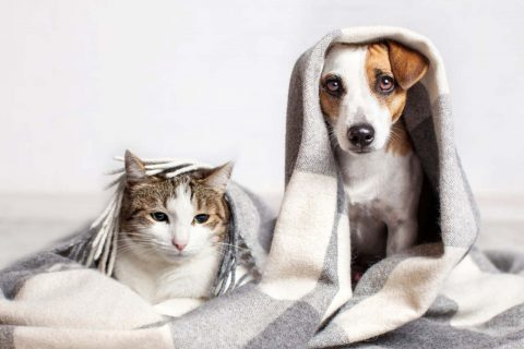 bir battaniyenin altındaki kedi ve köpek